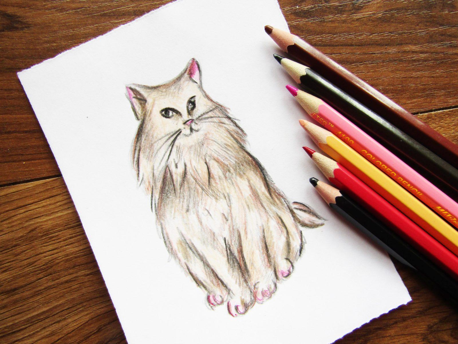 Как нарисовать кошку породы Мейн-кун - 1