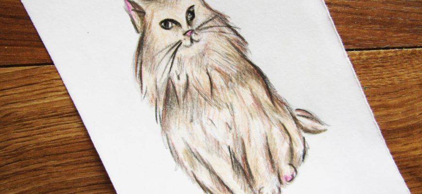 Как нарисовать кошку породы Мейн-кун