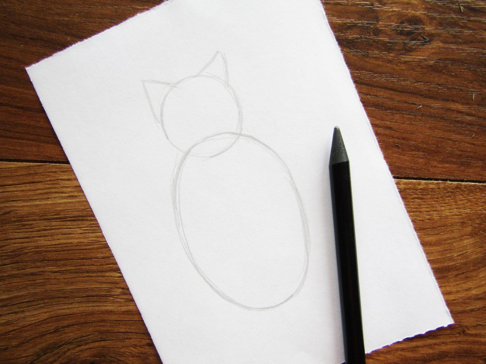 Как нарисовать кошку породы Мейн-кун - 2