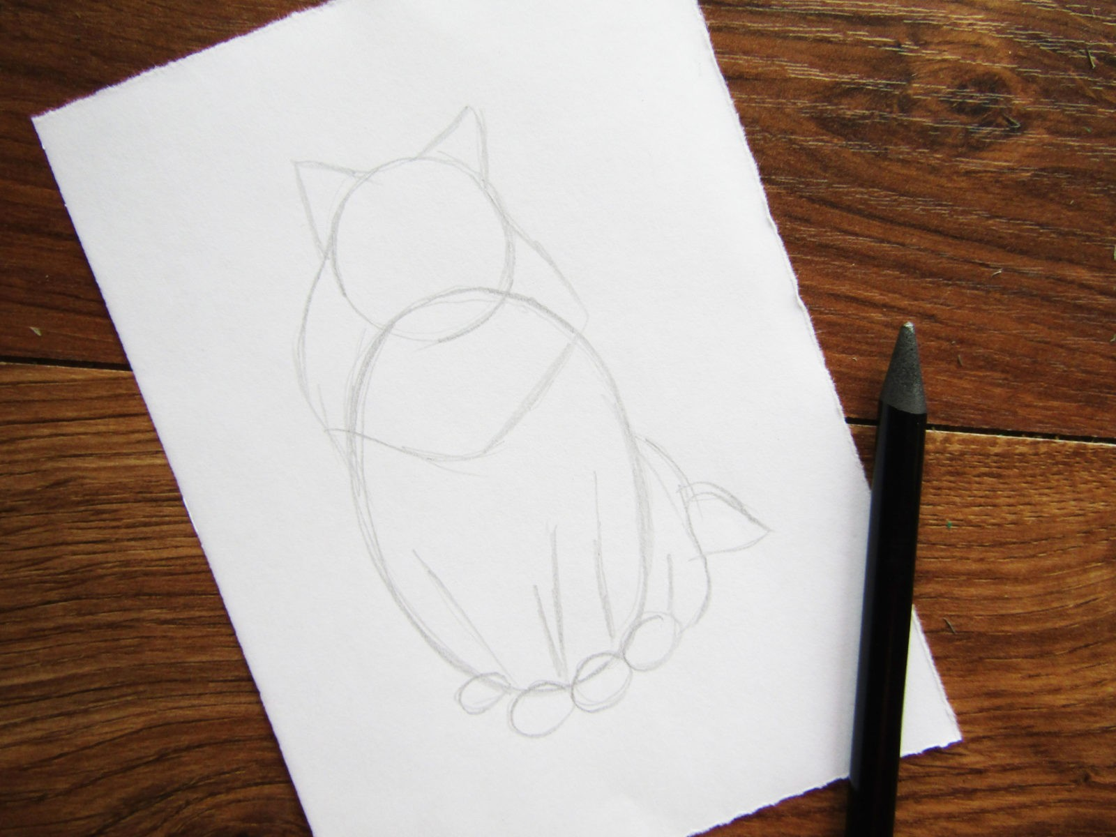 Как нарисовать кошку породы Мейн-кун - 3