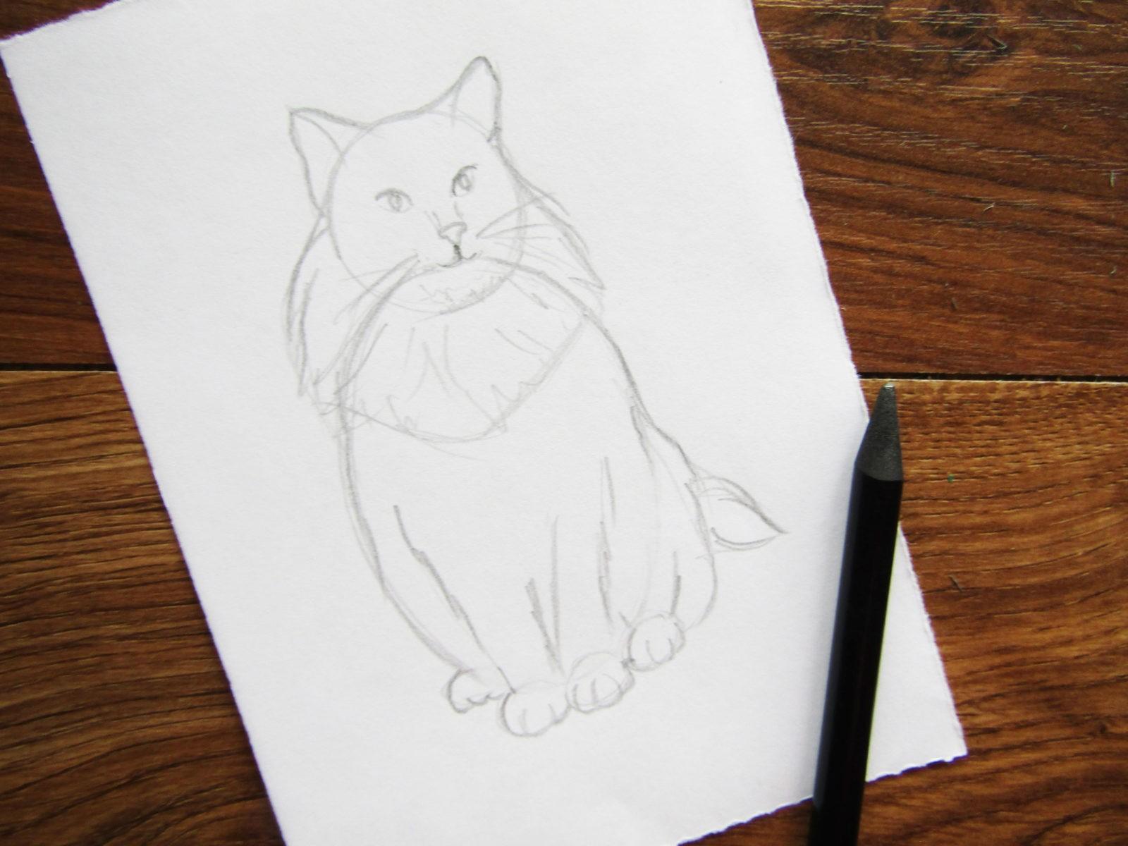 Как нарисовать кошку породы Мейн-кун - 4