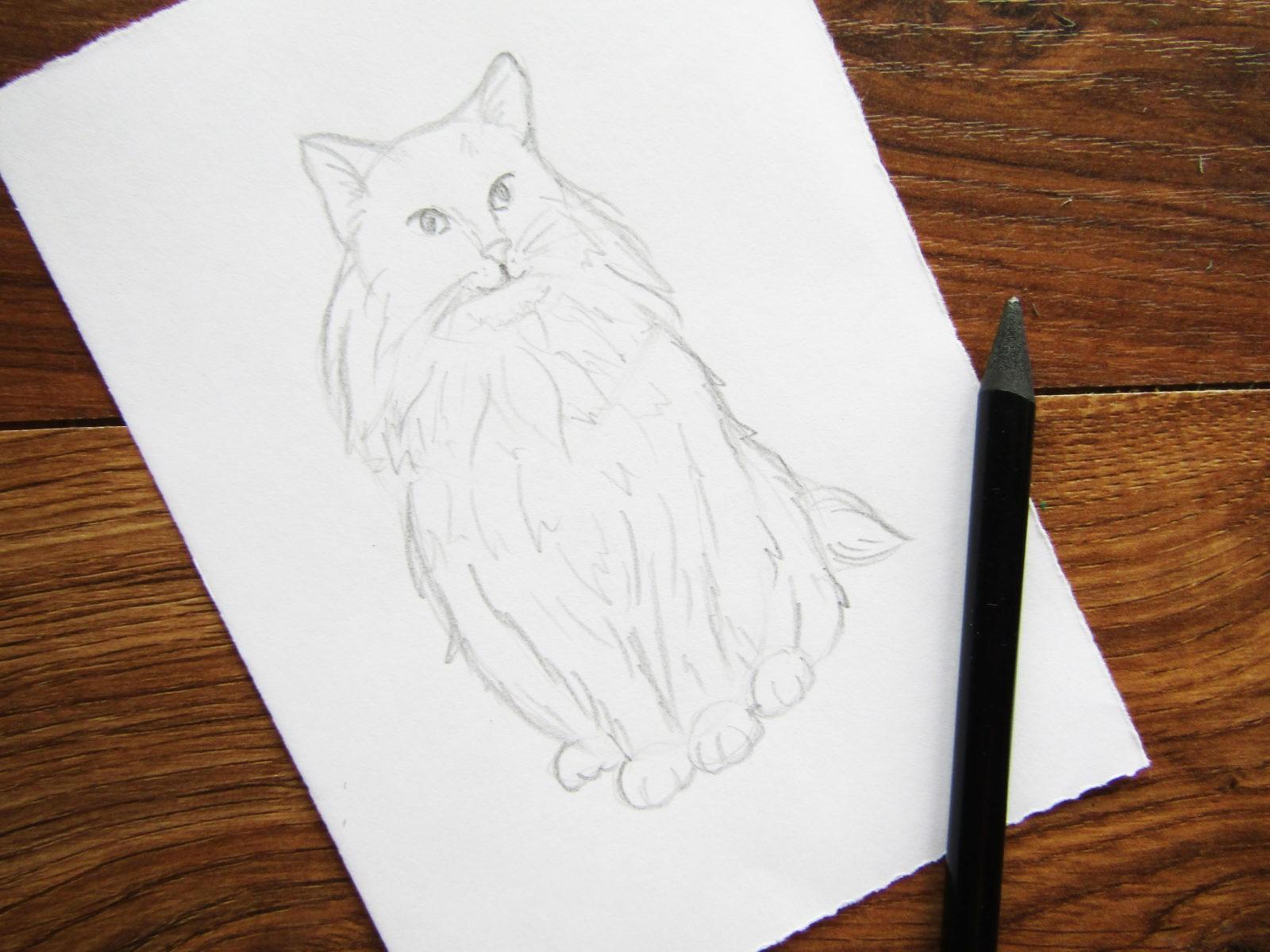 Как нарисовать кошку породы Мейн-кун - 5