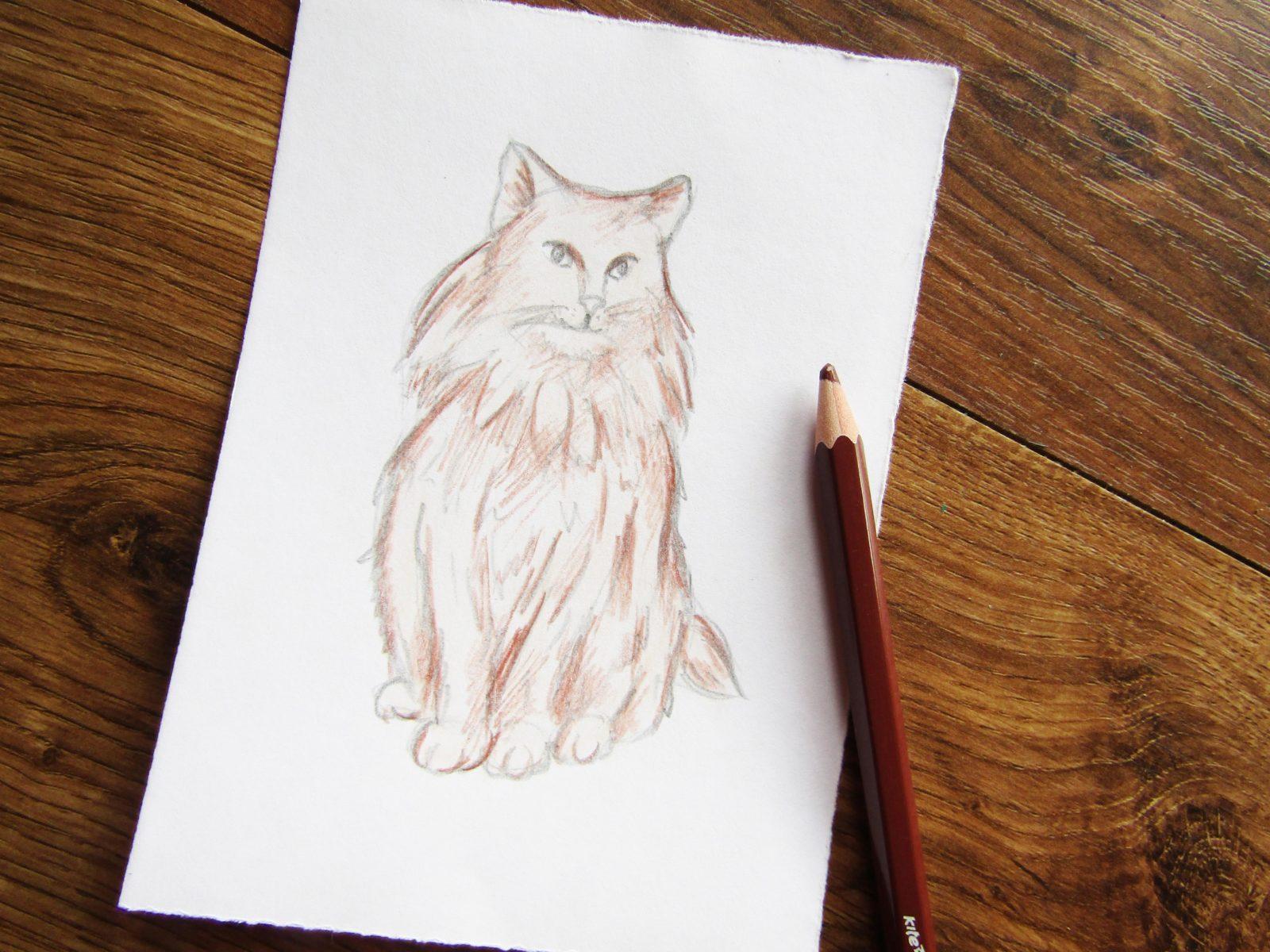 Как нарисовать кошку породы Мейн-кун - 6