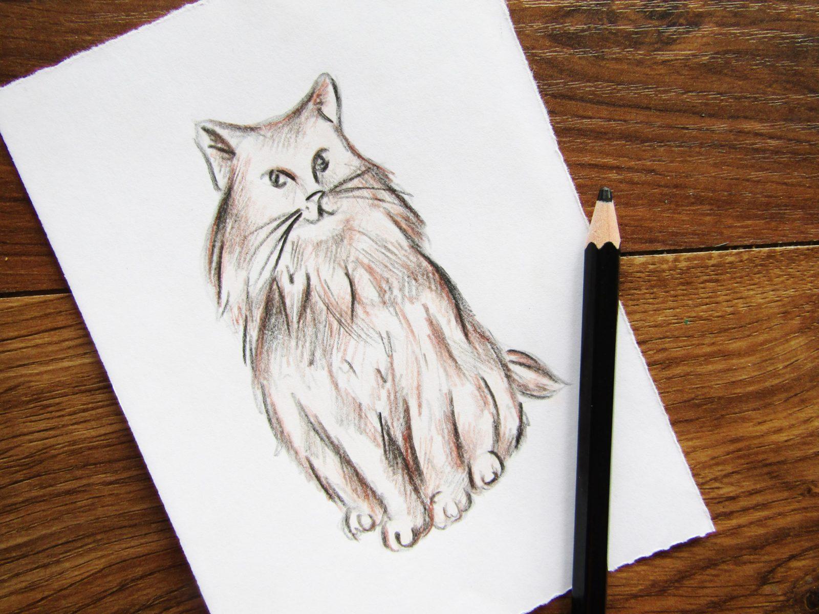 Как нарисовать кошку породы Мейн-кун - 7