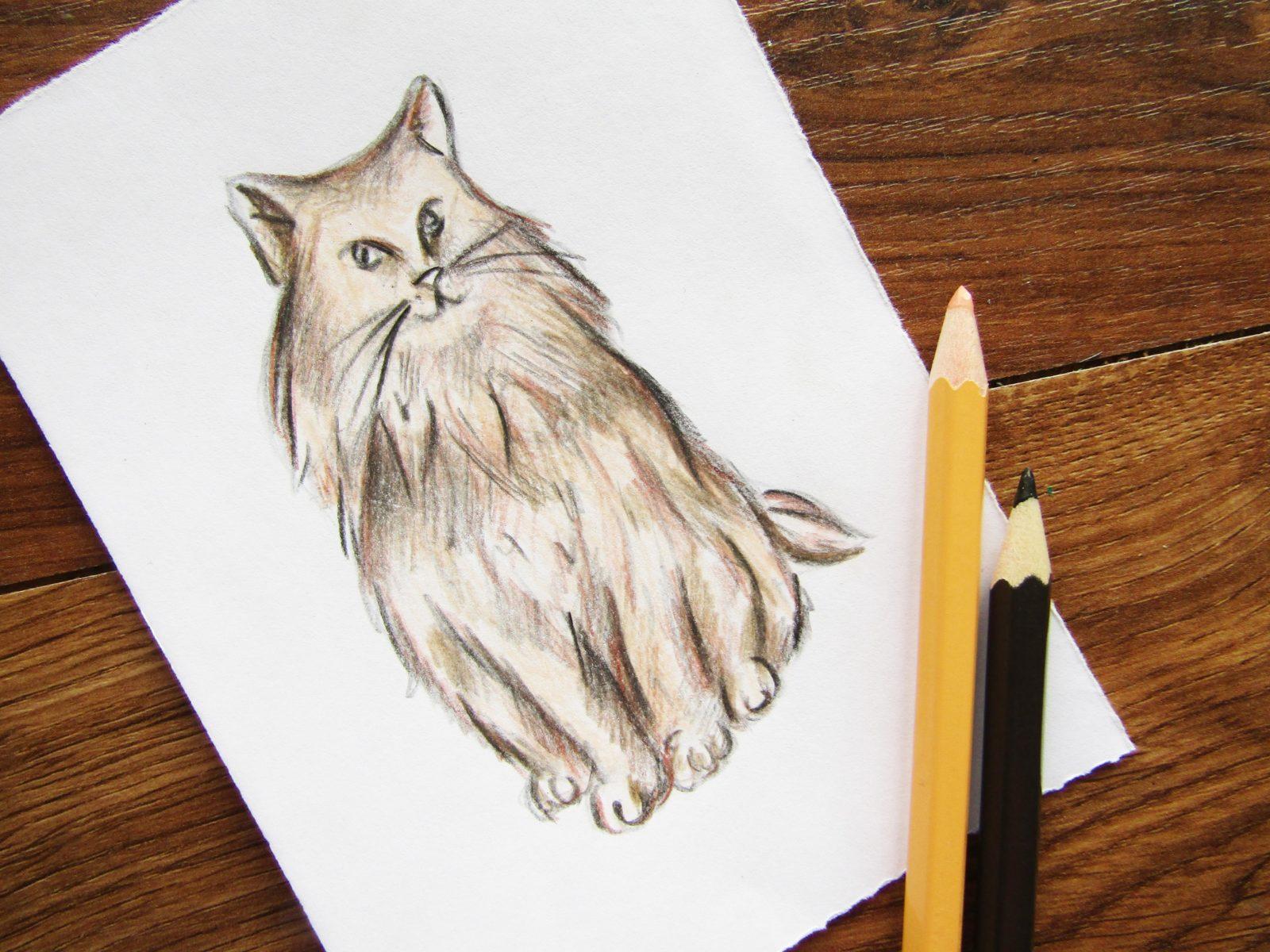 Как нарисовать кошку породы Мейн-кун - 8