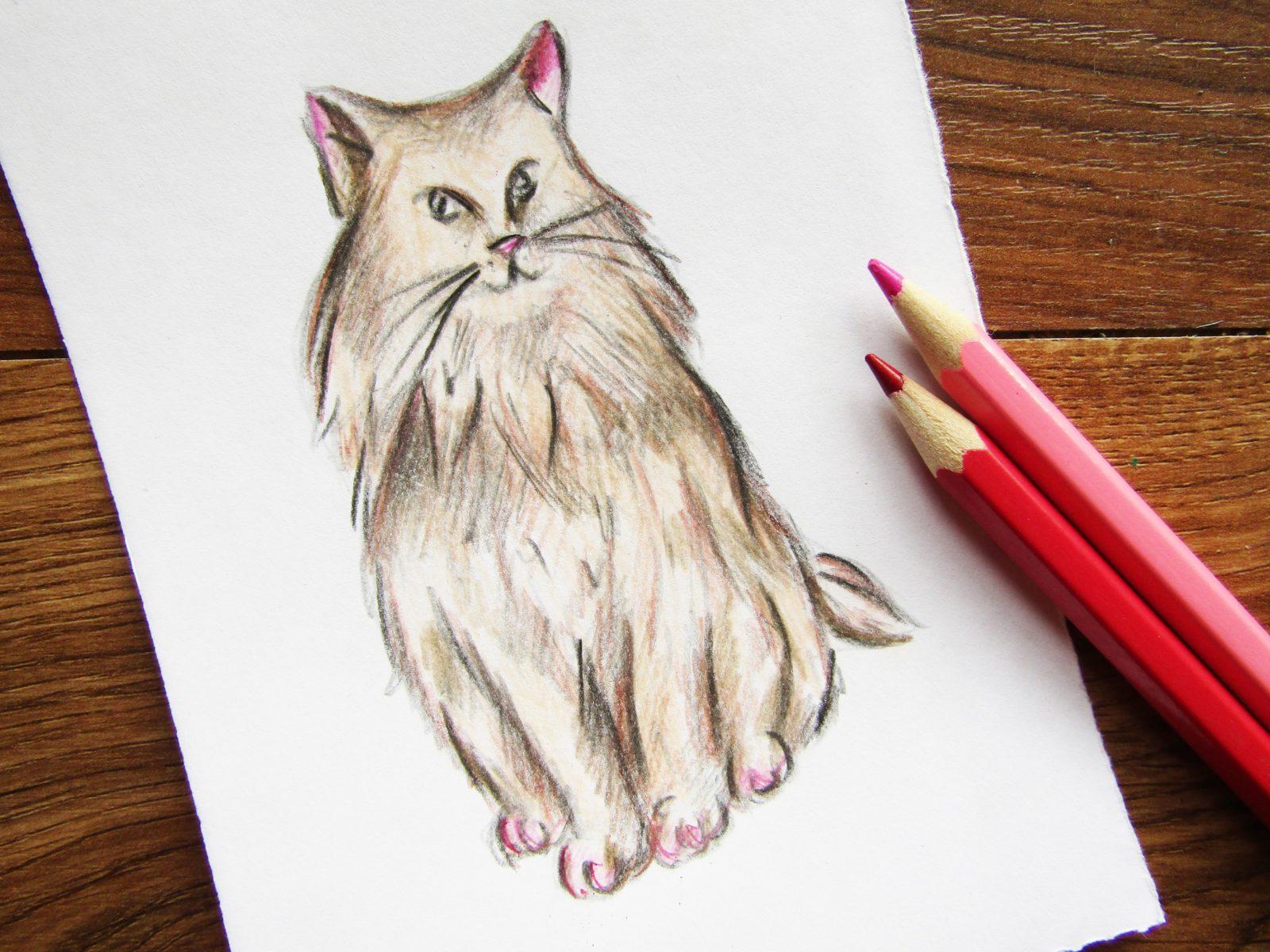 Как нарисовать кошку породы Мейн-кун - 9